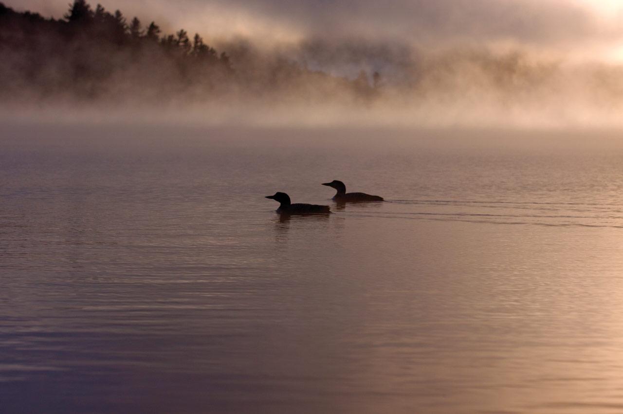 Land Lot Gull Pond Lake Placid